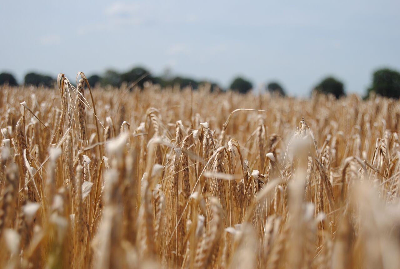 Onze huidige manier van landbouw..